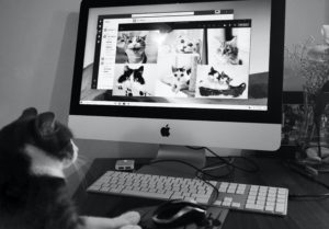 cat seated at a laptop participating in an online cat call