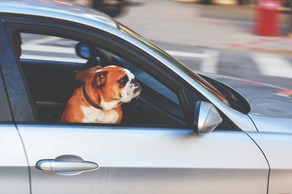 bulldog sits in a silver car, perhaps driving traffic to a website